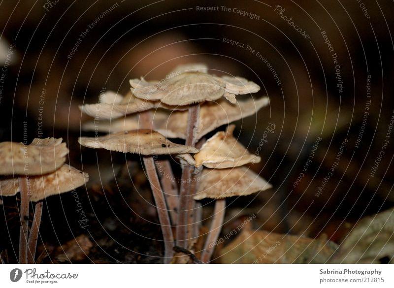 Familie Pilz Natur Pflanze Ernährung Freiheit braun elegant Umwelt Suche Wachstum Freizeit & Hobby wild fest Gemüse Sammlung Schönes Wetter
