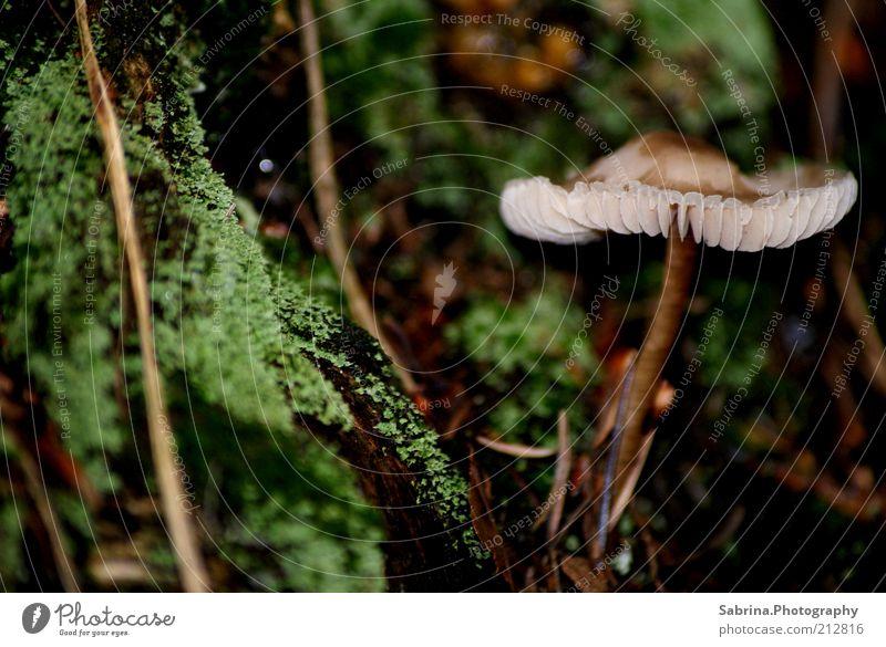 Suppe oder Soße? Natur alt Pflanze Umwelt Ernährung Holz braun Freizeit & Hobby frei Wachstum Schönes Wetter Gemüse Duft Sammlung Bioprodukte Pilz