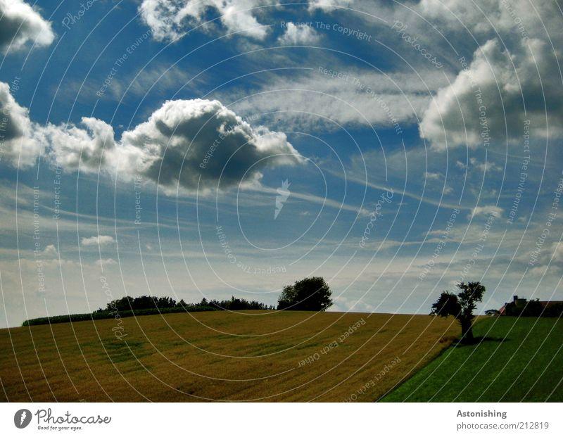der letzte Sommertag Umwelt Natur Landschaft Pflanze Himmel Wolken Schönes Wetter Baum Gras Sträucher Grünpflanze Wiese Feld Hügel stehen Wachstum hell schön