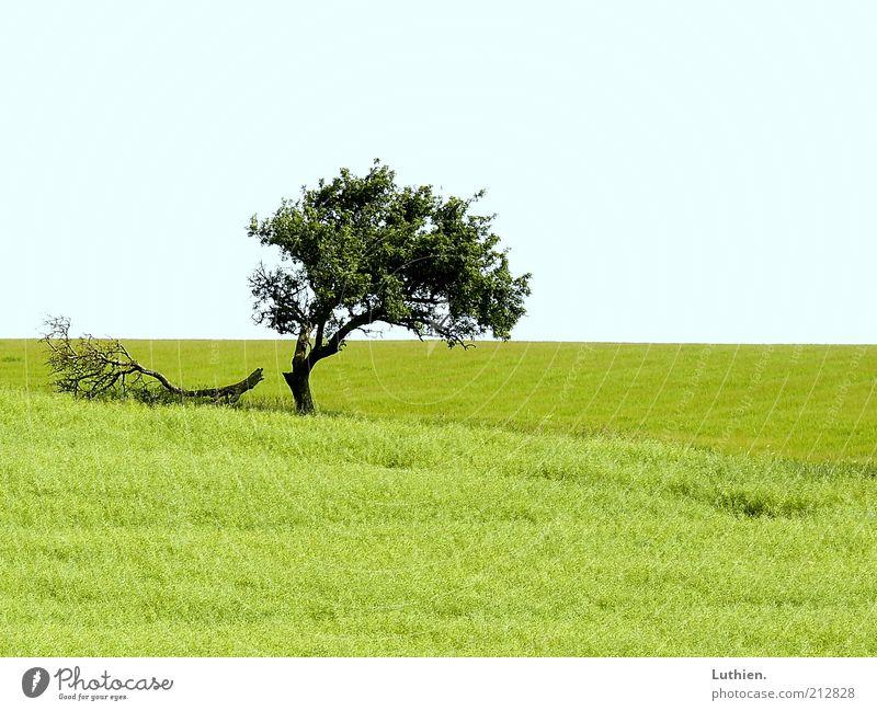 gebrochen. Natur Baum grün blau Sommer Ferne Wiese Gras Landschaft Umwelt Horizont Erde Weide Licht