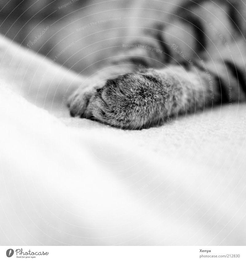 Lazy weiß ruhig schwarz Tier Erholung grau Katze Zufriedenheit schlafen Stoff Gelassenheit genießen Pfote Haustier Schwarzweißfoto Katzenpfote