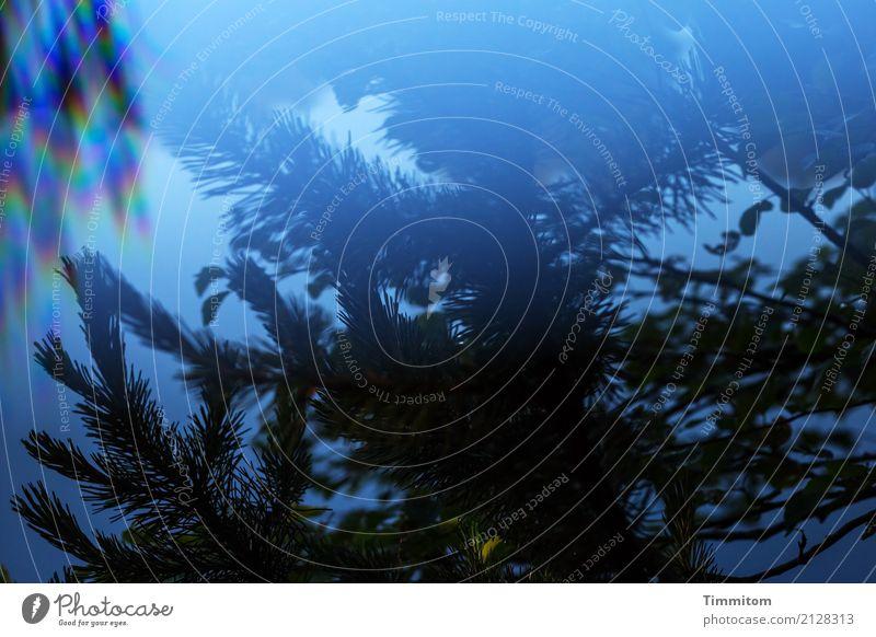 Ton in Ton | Zumindest weitgehend... Natur Pflanze blau Wasser dunkel Umwelt Gefühle natürlich See ästhetisch Schönes Wetter Ast Urelemente Tannennadel Prisma