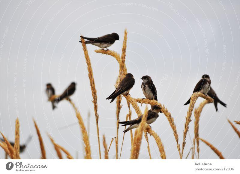Klassentreffen Himmel Pflanze Strand Ferien & Urlaub & Reisen Meer Tier Freiheit Frühling Küste Wetter Vogel sitzen Tiergruppe Wildtier Flügel Schönes Wetter