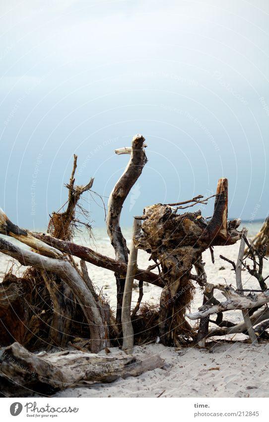Strandheinze alt Meer Holz Küste liegen Ast außergewöhnlich skurril Figur bizarr Zweig Verschiedenheit Anordnung durcheinander Anhäufung
