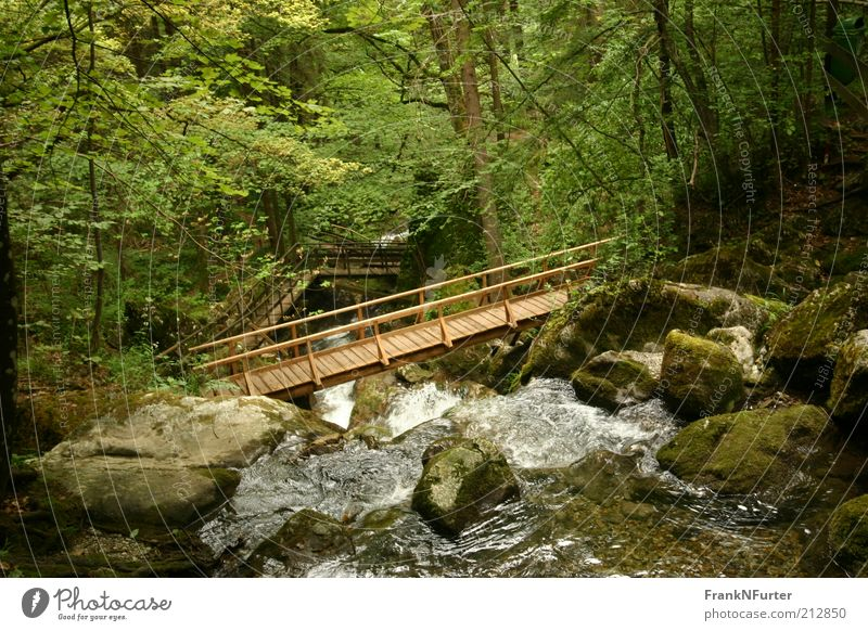 Bridging the Canyon Natur Wasser Baum Pflanze Sommer Ferien & Urlaub & Reisen Wald Berge u. Gebirge Landschaft Umwelt Felsen Ausflug Sträucher Freizeit & Hobby Alpen Moos