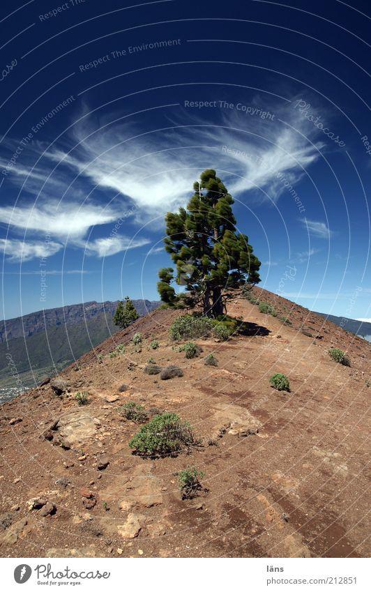 Pico Birigoyo Natur Baum blau Ferien & Urlaub & Reisen Wolken Ferne Berge u. Gebirge Freiheit Wege & Pfade Landschaft braun Erde Ausflug Hügel Gipfel