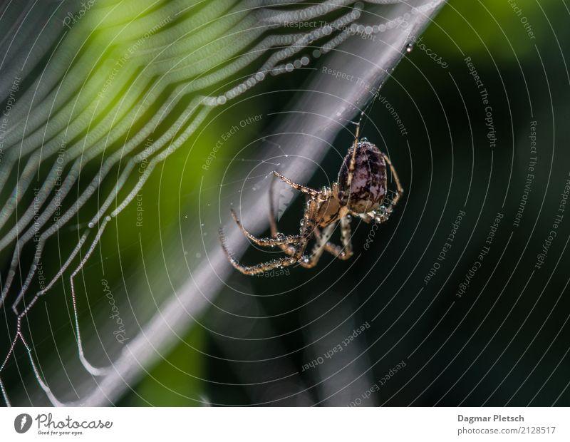 Spinne Natur Pflanze Sommer Tier Winter Wald Frühling Herbst Linie Park ästhetisch Wildtier Wassertropfen Schönes Wetter Fitness Turm