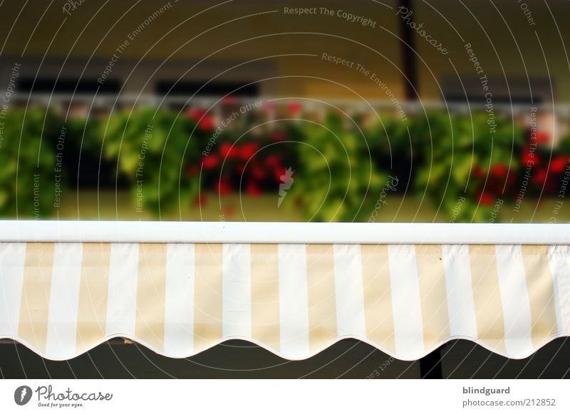 In The Summertime Sommer mehrfarbig gelb grün rot weiß Markise Streifen Muster Wellenlinie Farbfoto Außenaufnahme Experiment Menschenleer Tag Licht Schatten
