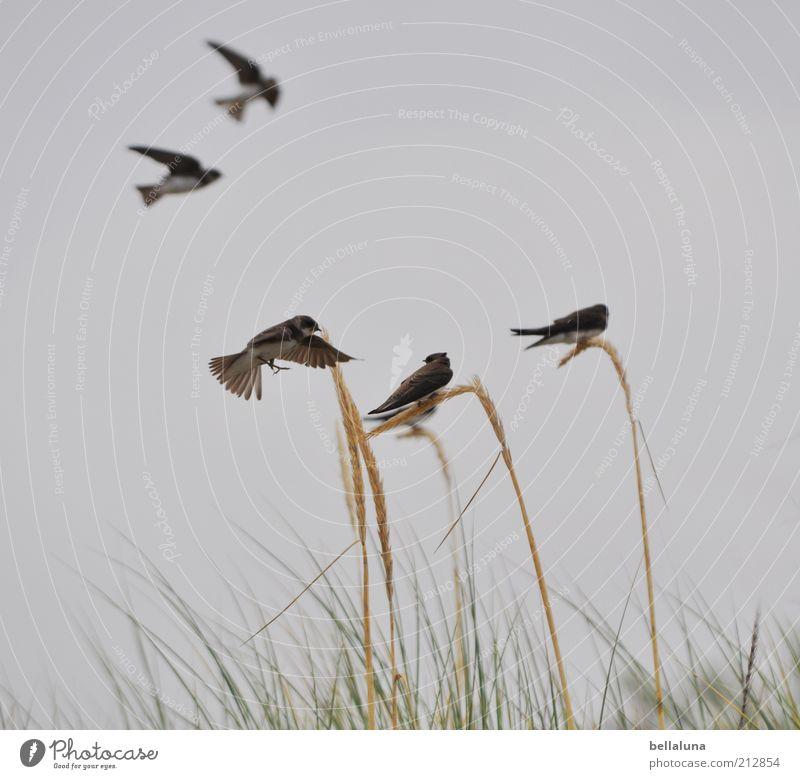 Rück mal ein Stück! Freiheit Sommer Natur Himmel Wolkenloser Himmel Frühling Wetter Schönes Wetter Pflanze Wildpflanze Küste Tier Wildtier Vogel Flügel