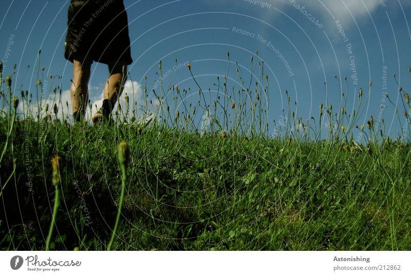 walk the grass Mensch maskulin Beine 1 Umwelt Natur Landschaft Pflanze Himmel Wolken Sommer Wetter Schönes Wetter Gras Hügel Hose gehen blau grün schwarz