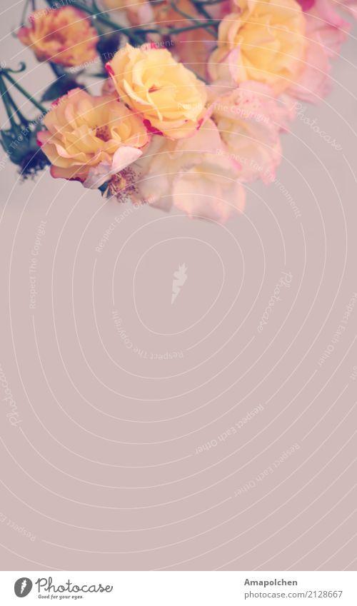 ::18-18:: Valentinstag Muttertag Ostern Hochzeit Geburtstag Trauerfeier Beerdigung Taufe Natur Frühling Sommer Blume Garten Park Freude Glück Fröhlichkeit