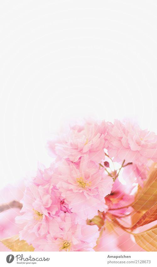 :18-08:: Natur Pflanze Sommer schön Blume Erholung ruhig Freude Gesundheit Blüte Frühling Glück Garten Design Park elegant