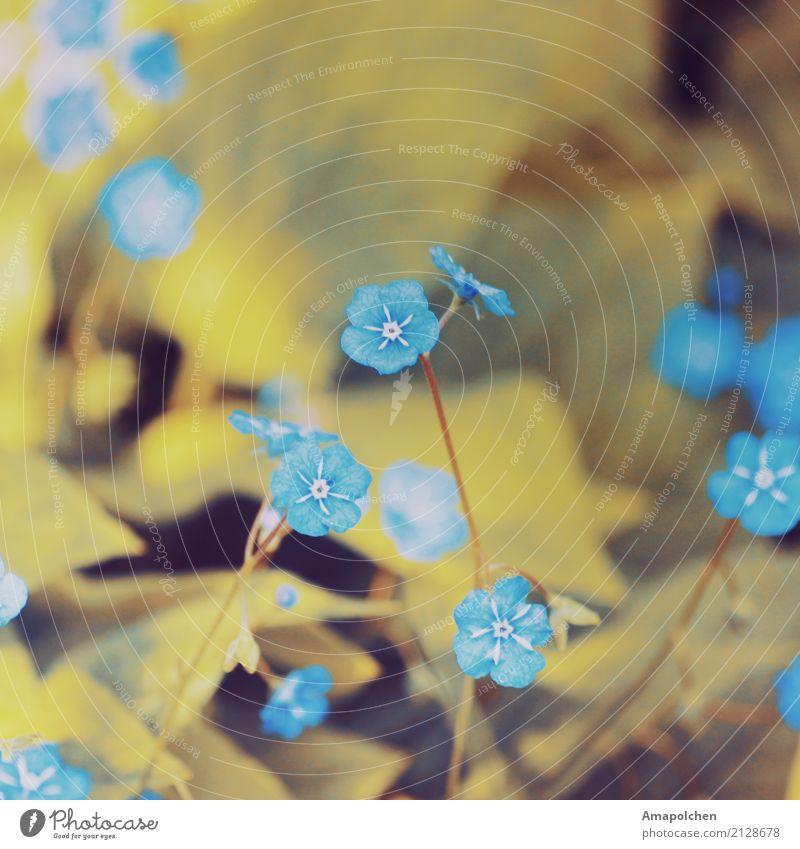 ::17-26:: Umwelt Natur Pflanze Frühling Sommer Blume Sträucher Blatt Blüte Grünpflanze Garten Park Wiese Freude Glück Fröhlichkeit Zufriedenheit Lebensfreude
