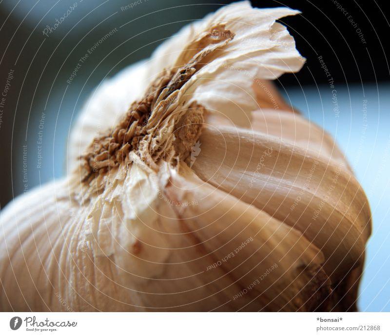 knoofi weiß blau Gesundheit Lebensmittel frisch Kochen & Garen & Backen rund Kräuter & Gewürze lecker Appetit & Hunger Duft Pflanze Zutaten dehydrieren Vorbereitung Knoblauch