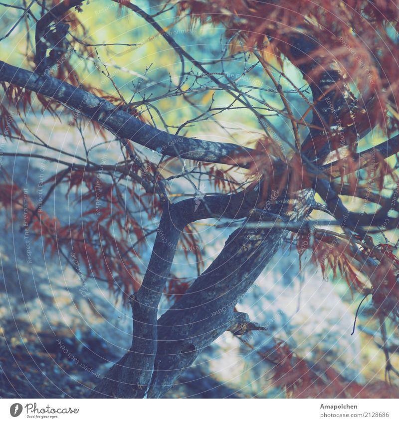 ::17-30:: Ferien & Urlaub & Reisen Tourismus Ausflug Camping Fahrradtour wandern Umwelt Natur Landschaft Frühling Sommer Herbst Wetter Pflanze Baum Blatt
