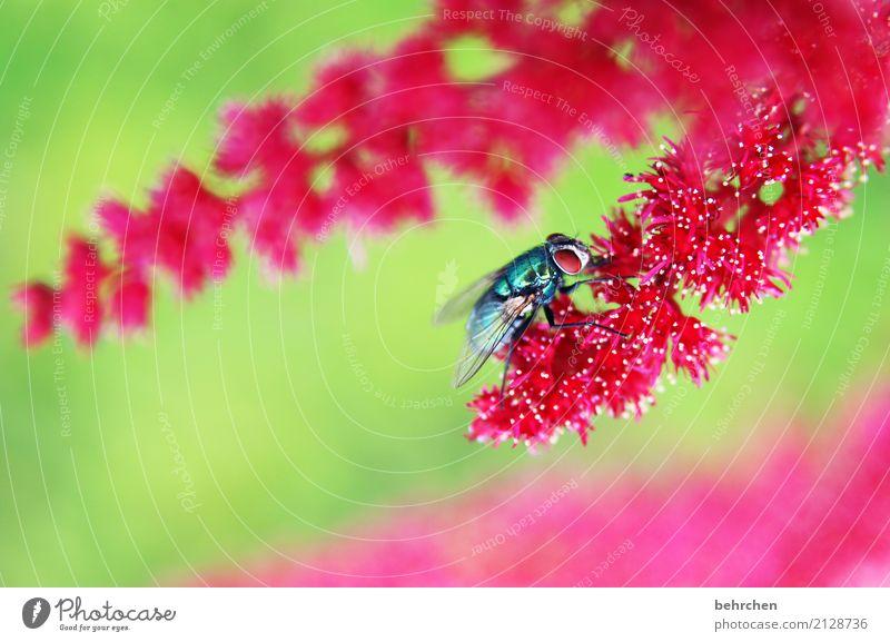 pinky Natur Pflanze Tier Sommer Schönes Wetter Blume Blatt Blüte Prachtspiere Garten Park Wiese Wildtier Fliege Tiergesicht Flügel 1 Blühend Duft fliegen