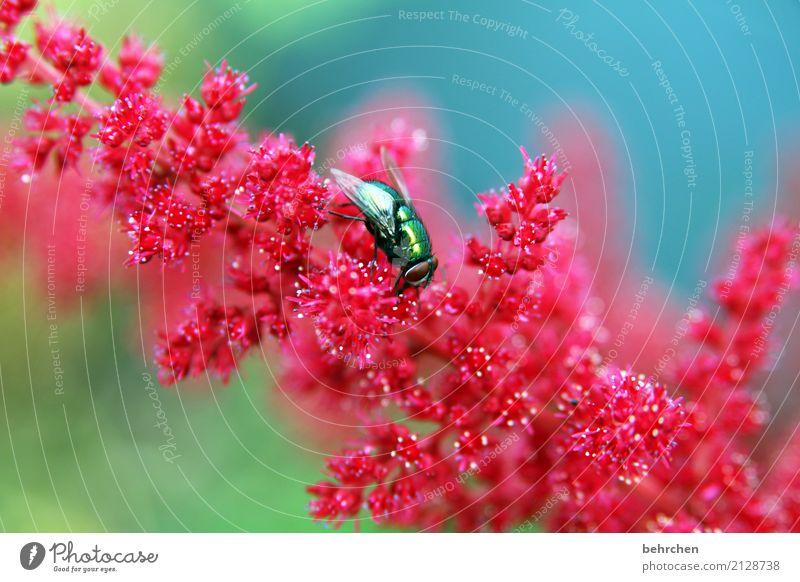 auffallen Natur Pflanze Tier Sommer Blume Blüte Garten Park Wiese Wildtier Fliege Tiergesicht Flügel 1 Blühend Duft fliegen Fressen schön klein leuchten
