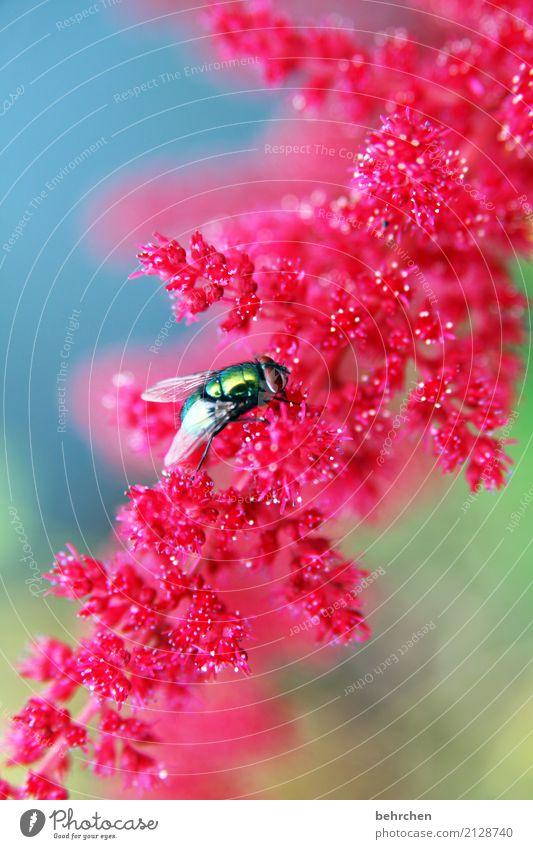 dreifarbigkeit Natur Pflanze blau Sommer schön grün Blume rot Blatt Tier Blüte Wiese klein Garten fliegen rosa