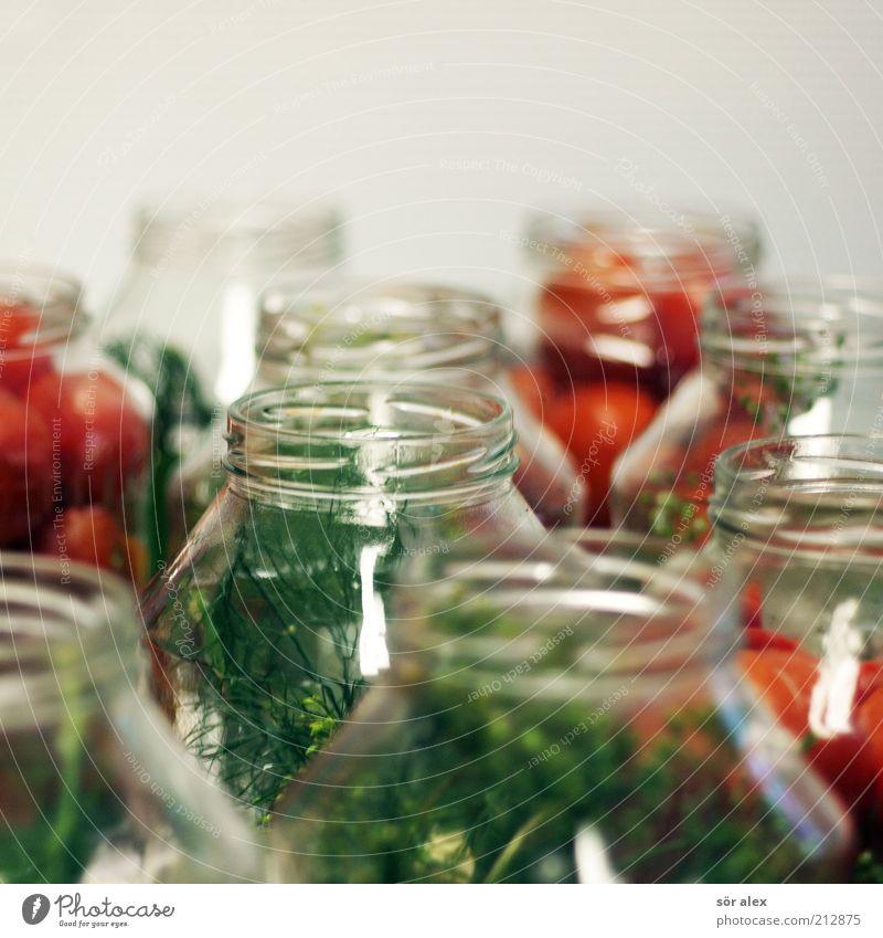 Tomaten einlegen Lebensmittel Gemüse Dill Kräuter & Gewürze Einmachglas Tomatenglas Glas lecker grün rot Delikatesse konservieren Haltbarkeit konserviert
