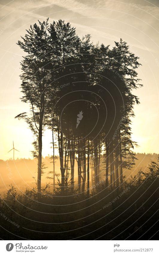 mistery Natur Sommer Herbst Klima Schönes Wetter Nebel Pflanze Wald Wäldchen Abholzung hoch gelb gold ruhig nachhaltig Morgen Unterholz grell Luft