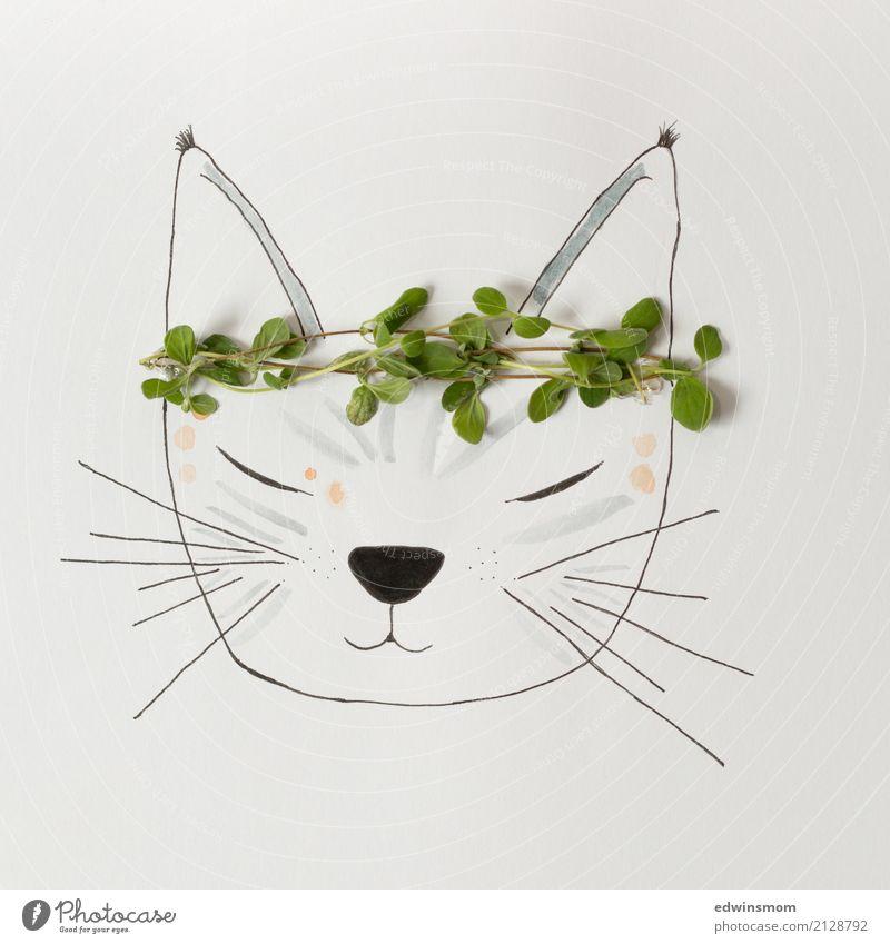 Miau Katze Natur Pflanze Sommer grün weiß Erholung Tier ruhig natürlich grau hell Freizeit & Hobby wild träumen Dekoration & Verzierung