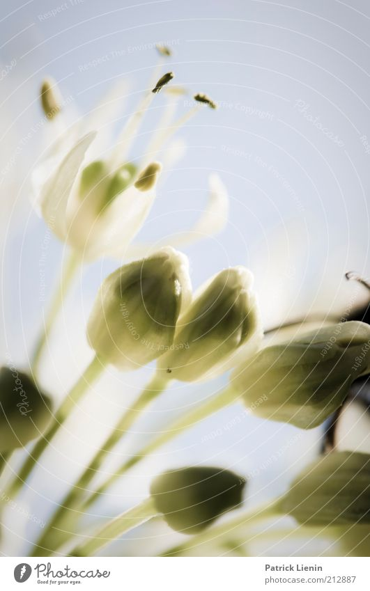 Mädchenbild Natur Pflanze Blüte Umwelt geschlossen frisch neu zart leicht Urelemente Blütenknospen Nutzpflanze Wildpflanze
