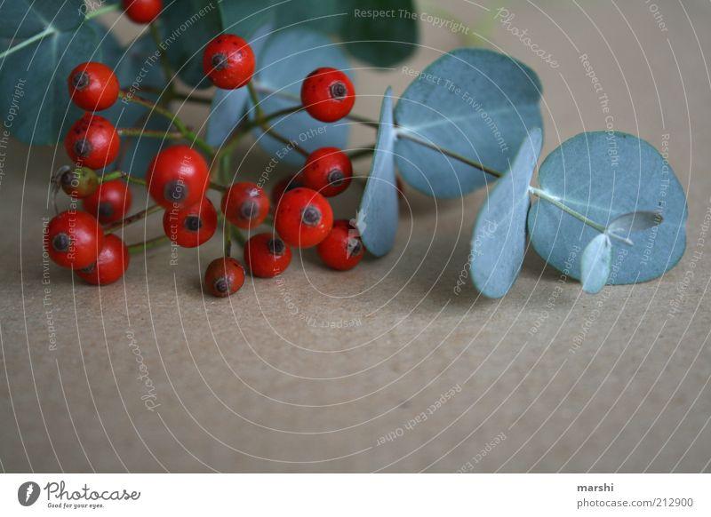 herbstliches Stillleben Natur grün rot Pflanze Blatt Herbst braun rund Sträucher Dekoration & Verzierung Stillleben Beeren herbstlich arrangiert Vogelbeeren Beerensträucher