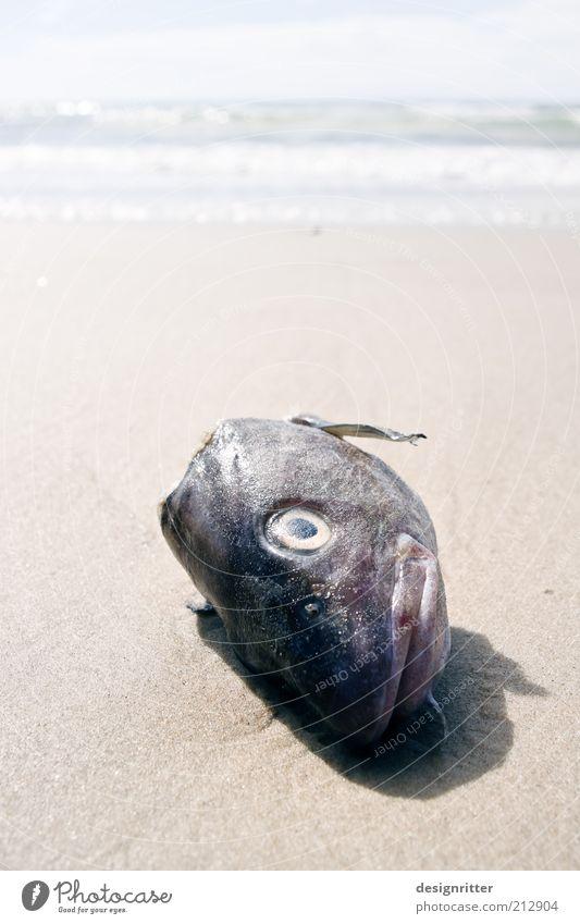 Landung der Fischköppe Ferien & Urlaub & Reisen Ferne Sommer Sommerurlaub Fischereiwirtschaft Strand Nordsee Meer Brandung Tiergesicht Schuppen Kopf Fischkopf