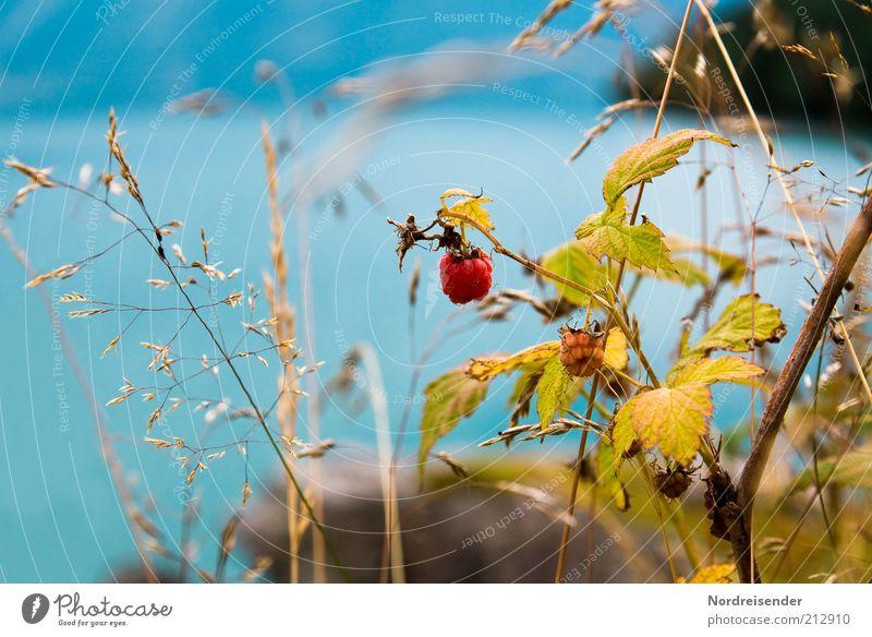 Am Gletscher Lebensmittel Frucht Bioprodukte Sinnesorgane Umwelt Natur Landschaft Pflanze Wasser Sommer Gras Sträucher Wildpflanze Seeufer entdecken verblüht