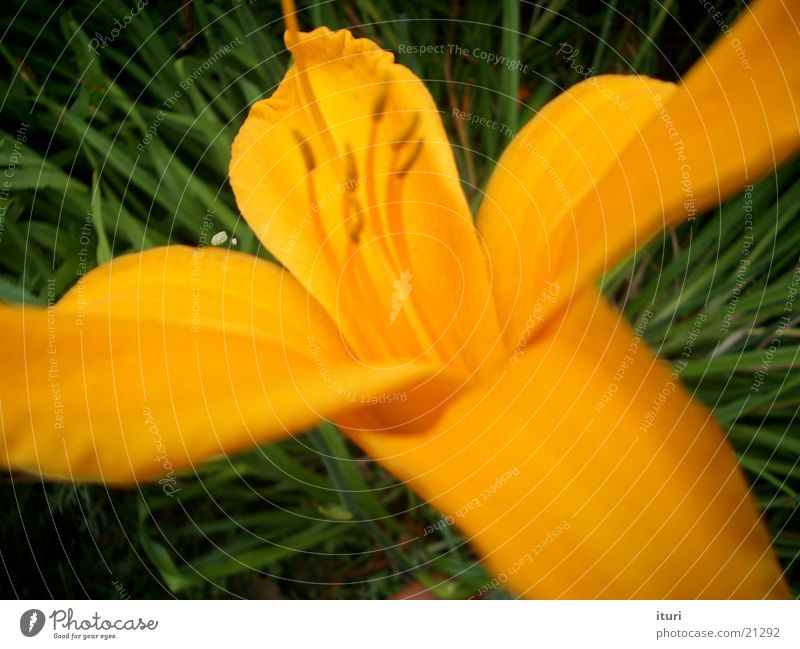 gelbe blüten schön Blume Sommer Blüte Frühling