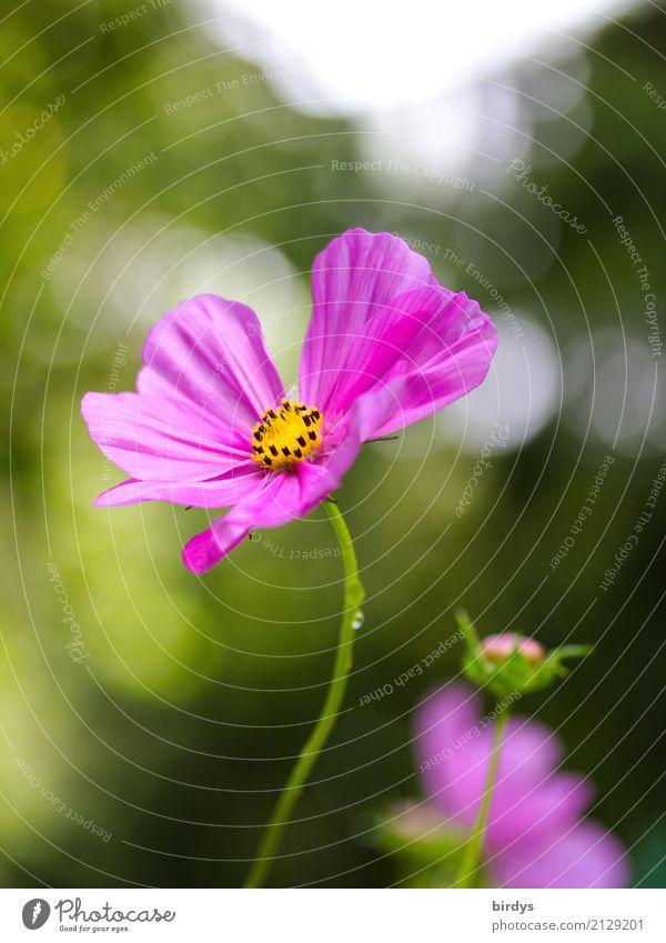 Flowerpower Natur Pflanze Sommer Schönes Wetter Blume Blüte Garten Blühend Duft ästhetisch Freundlichkeit positiv schön gelb grün rosa weiß Farbe Idylle