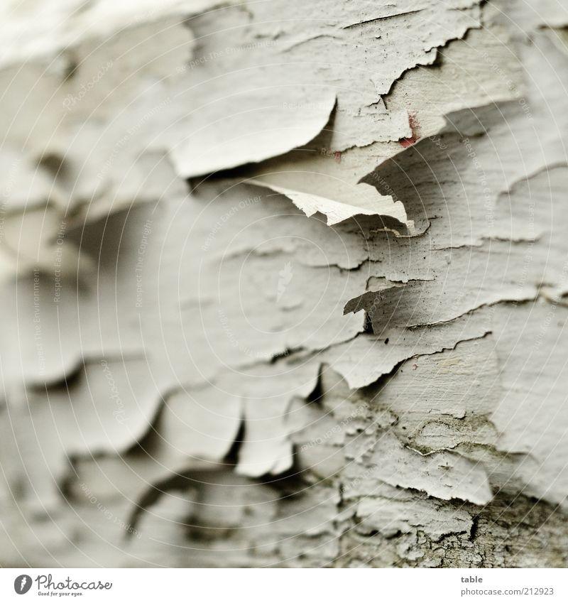 gaaanz alt . . . Holz grau weiß Anstrich Farbstoff abblättern Farbschicht dreckig verwittert Lack Deckanstrich Farbfoto Außenaufnahme Nahaufnahme Detailaufnahme