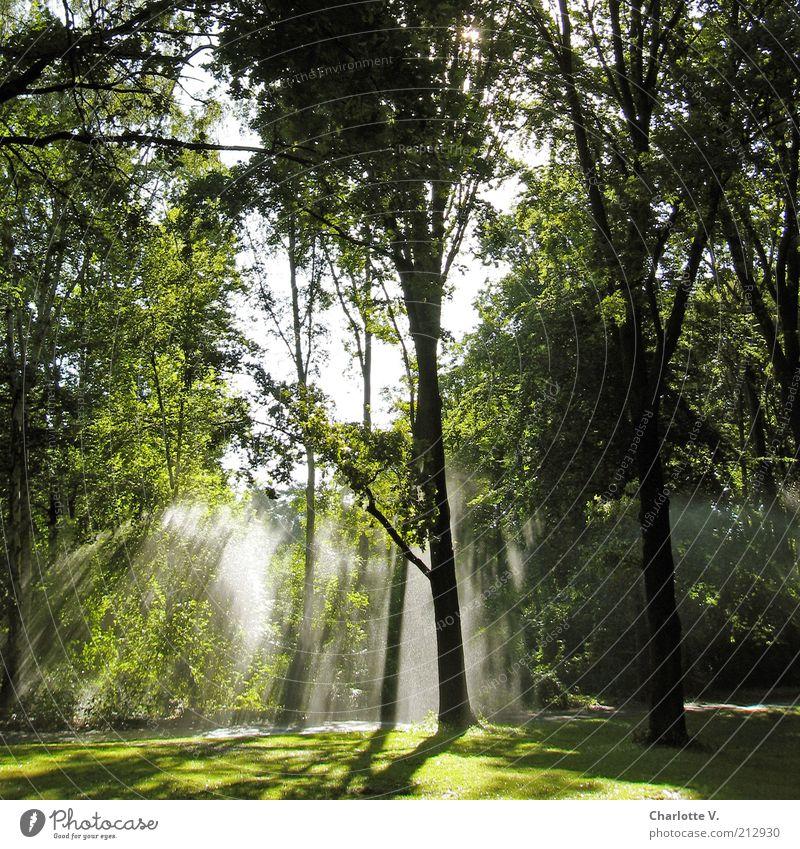 Wasserstrahlen Umwelt Natur Pflanze Sonnenlicht Sommer Schönes Wetter Baum Gras Sträucher Park leuchten grün ruhig hell Lichteinfall Idylle hellgrün