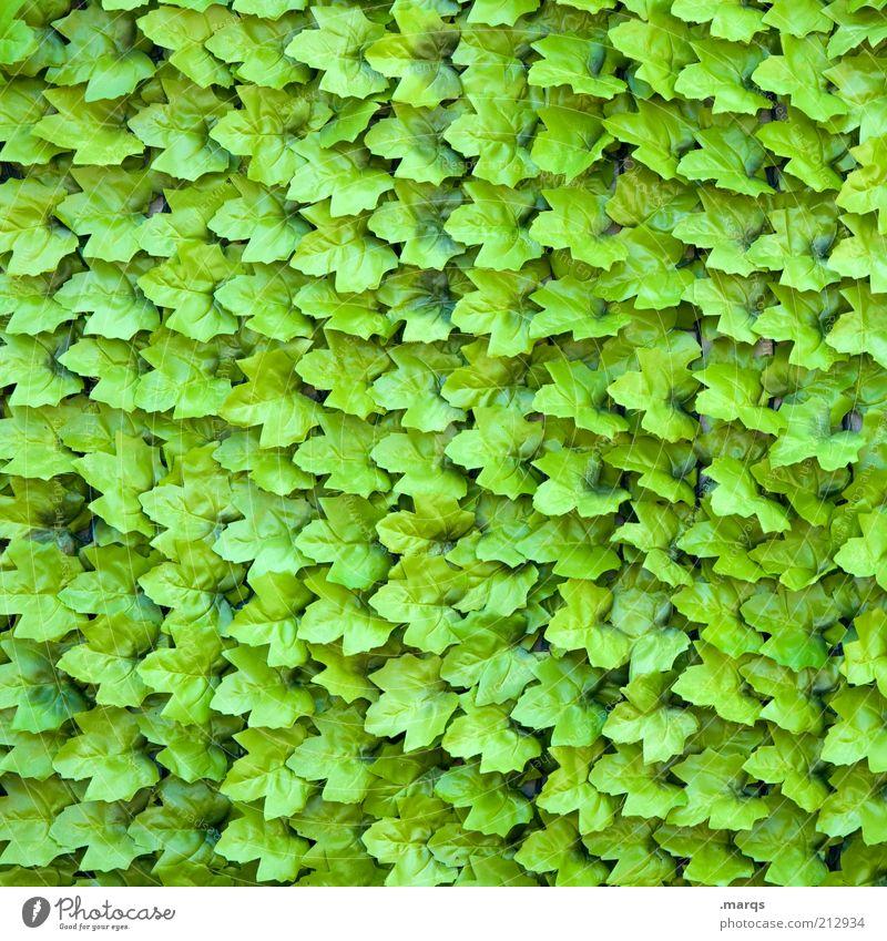 Herbsten Natur Pflanze Blatt Grünpflanze außergewöhnlich viele grün Farbe Ordnung Weinblatt Hintergrundbild Farbfoto Außenaufnahme Nahaufnahme
