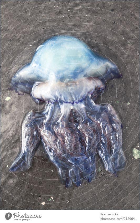 Im Himmelreich Natur Wasser Himmel glänzend ästhetisch Tier Wissenschaften Ekel Glätte Reflexion & Spiegelung Qualle schleimig Tentakel Meerestier Meeresforschung Totes Tier