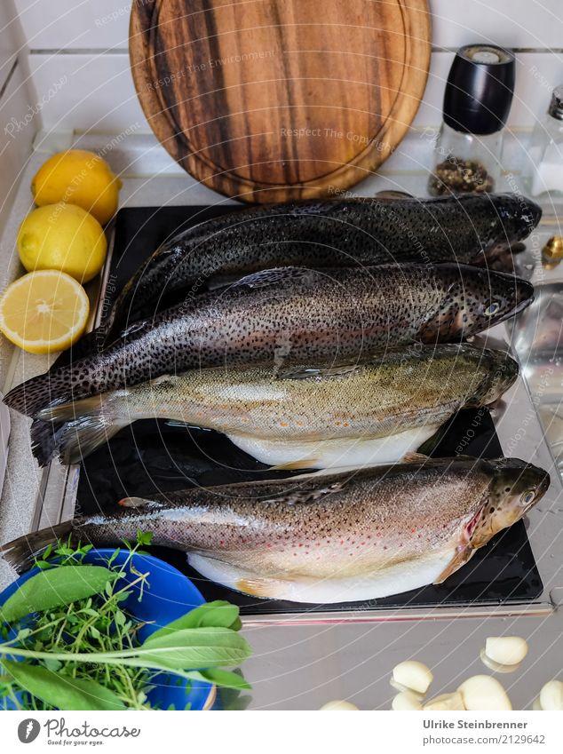 Frischer Fisch 1 Lebensmittel Kräuter & Gewürze Forelle Ernährung Schalen & Schüsseln Küche Essen Wildtier Totes Tier 4 liegen natürlich Sauberkeit Vorfreude