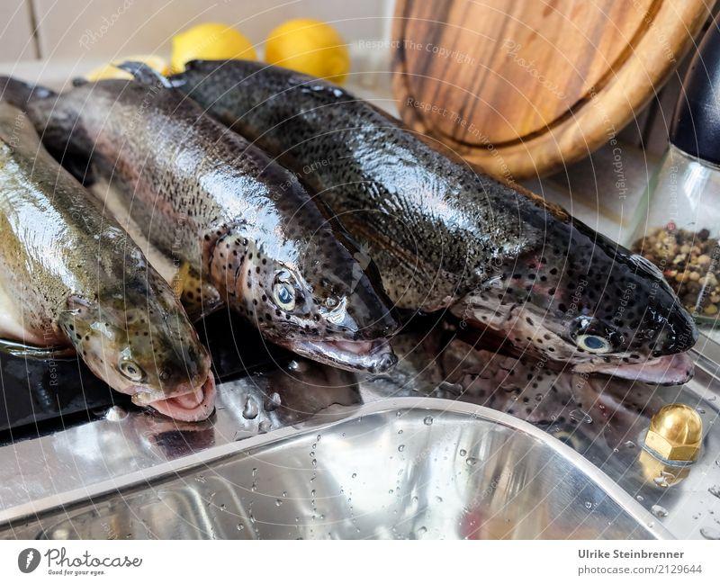 Frischer Fisch 2 Lebensmittel Kräuter & Gewürze Forelle Ernährung Schalen & Schüsseln Küche Essen Wildtier Totes Tier 3 liegen natürlich Sauberkeit Vorfreude