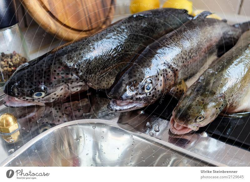 Frischer Fisch 3 Lebensmittel Kräuter & Gewürze Forellen Ernährung Schalen & Schüsseln Küche Essen Wildtier Totes Tier liegen natürlich Sauberkeit Vorfreude