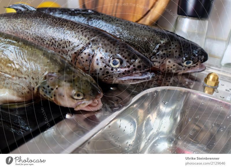Frischer Fisch 4 Lebensmittel Kräuter & Gewürze Forelle Ernährung Schalen & Schüsseln Küche Essen Wildtier Totes Tier 3 liegen natürlich Sauberkeit Vorfreude