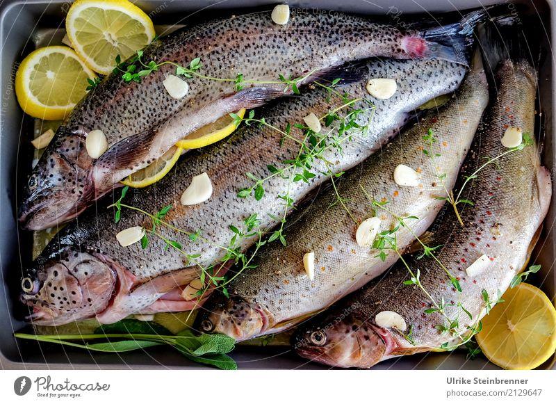 Frischer Fisch 5 Lebensmittel Kräuter & Gewürze Forelle Ernährung Schalen & Schüsseln Küche Essen Wildtier Totes Tier 4 liegen natürlich Sauberkeit Vorfreude