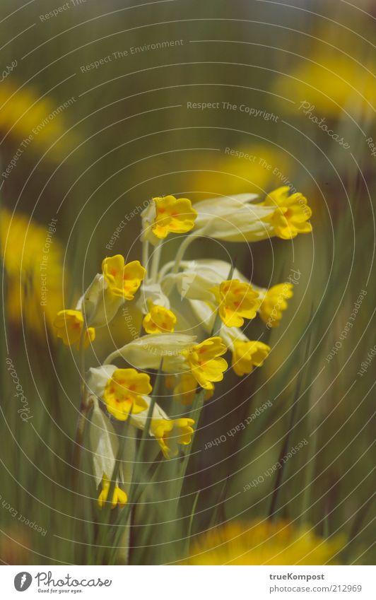 Streck die Lauscher aus! Natur Blume grün Pflanze Sommer gelb Wiese Blüte Gras Frühling Gesundheit frisch ästhetisch Blühend Freundlichkeit