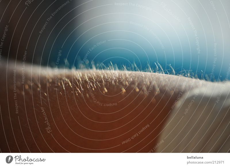 Flaum Mensch Haare & Frisuren Sonnenlicht Farbfoto mehrfarbig Innenaufnahme Nahaufnahme Tag Nackte Haut Bildausschnitt Härchen Textfreiraum oben