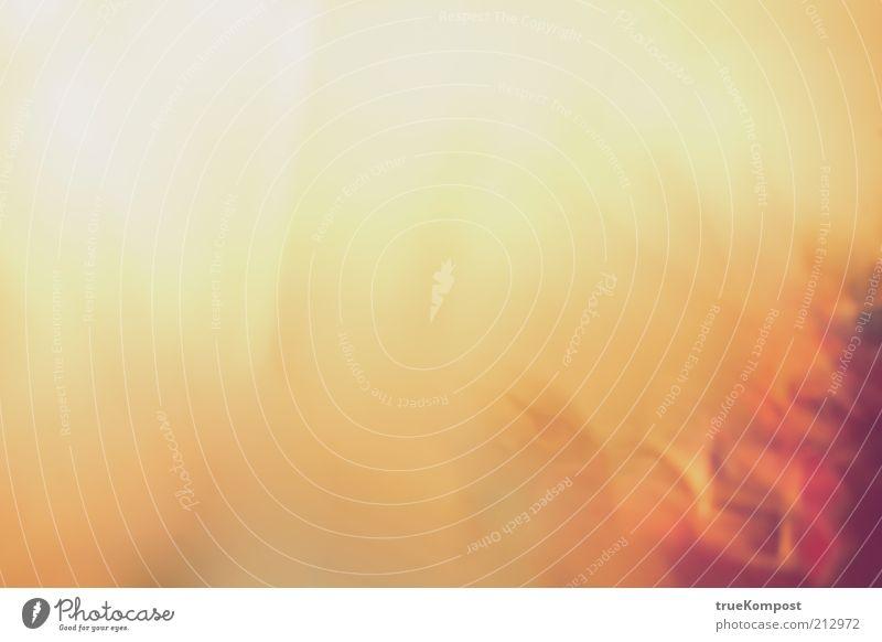 Das Gewächs. ästhetisch außergewöhnlich elegant Flüssigkeit Unendlichkeit gelb gold violett rot weiß Gefühle durcheinander Wachstum Linie Farbfoto Experiment