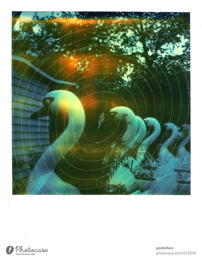 Polaroid zeigt Tretboote in schwanenform. Verfallen. Spreepark Freizeitpark Freizeit & Hobby Vergnügungspark Tier Schwan alt verfallen ausgemustert