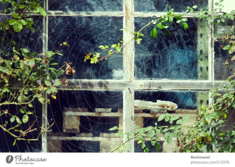 Werkstätte Pflanze Blatt alt Sträucher Strauchrose Fenster Fensterscheibe Fensterkreuz Fensterrahmen Paletten Glasscheibe Kletterpflanzen Werkstatt Farbfoto