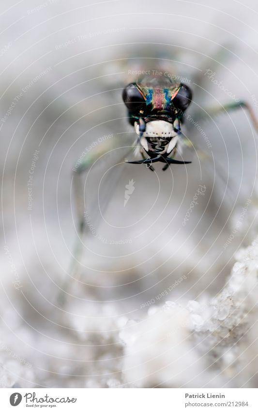 evil beetle Natur Auge Tier Stimmung Umwelt Gebiss bedrohlich Tiergesicht außergewöhnlich gruselig Wildtier bizarr Käfer Insekt Makroaufnahme