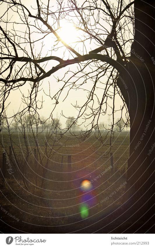 Baumgeäst vor Feld im Gegenlicht Winter Umwelt Natur Landschaft Sonnenaufgang Sonnenuntergang Herbst Klima Wetter Menschenleer Zaunpfahl Blendenfleck Geäst