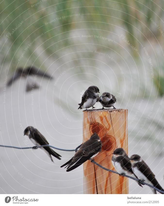 Sieben auf einen Streich Natur Sommer Strand Tier Freiheit Vogel Küste Umwelt fliegen sitzen Tiergruppe Flügel Wildtier niedlich Krallen Schwarm