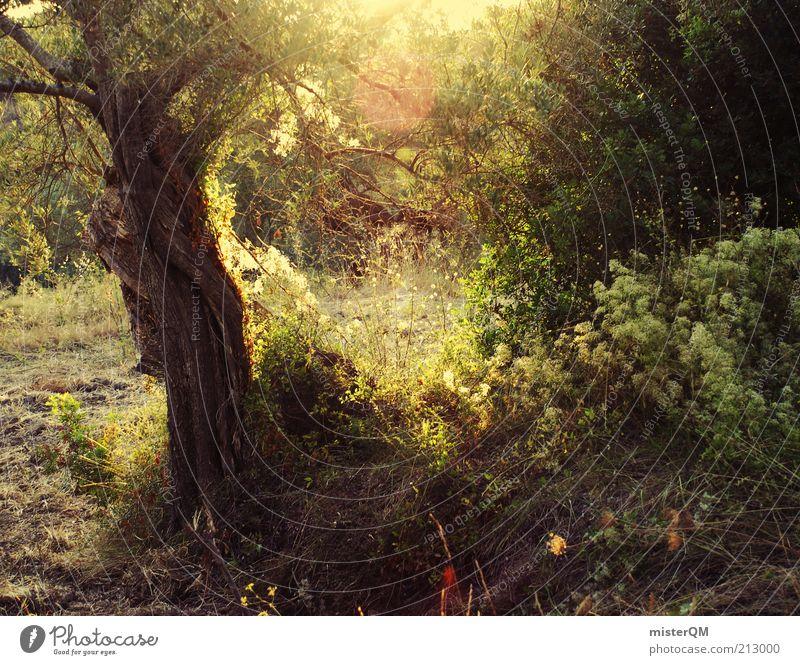 Lichtung. Natur grün Baum Pflanze Sonne ruhig Wald dunkel Landschaft Umwelt Zufriedenheit ästhetisch Frieden geheimnisvoll Fußweg Spanien