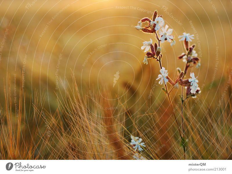 Fields of Summer. Natur schön Pflanze Blüte Freiheit Wärme Zufriedenheit Stimmung Umwelt ästhetisch Frieden Blühend Blume Makroaufnahme Leichtigkeit